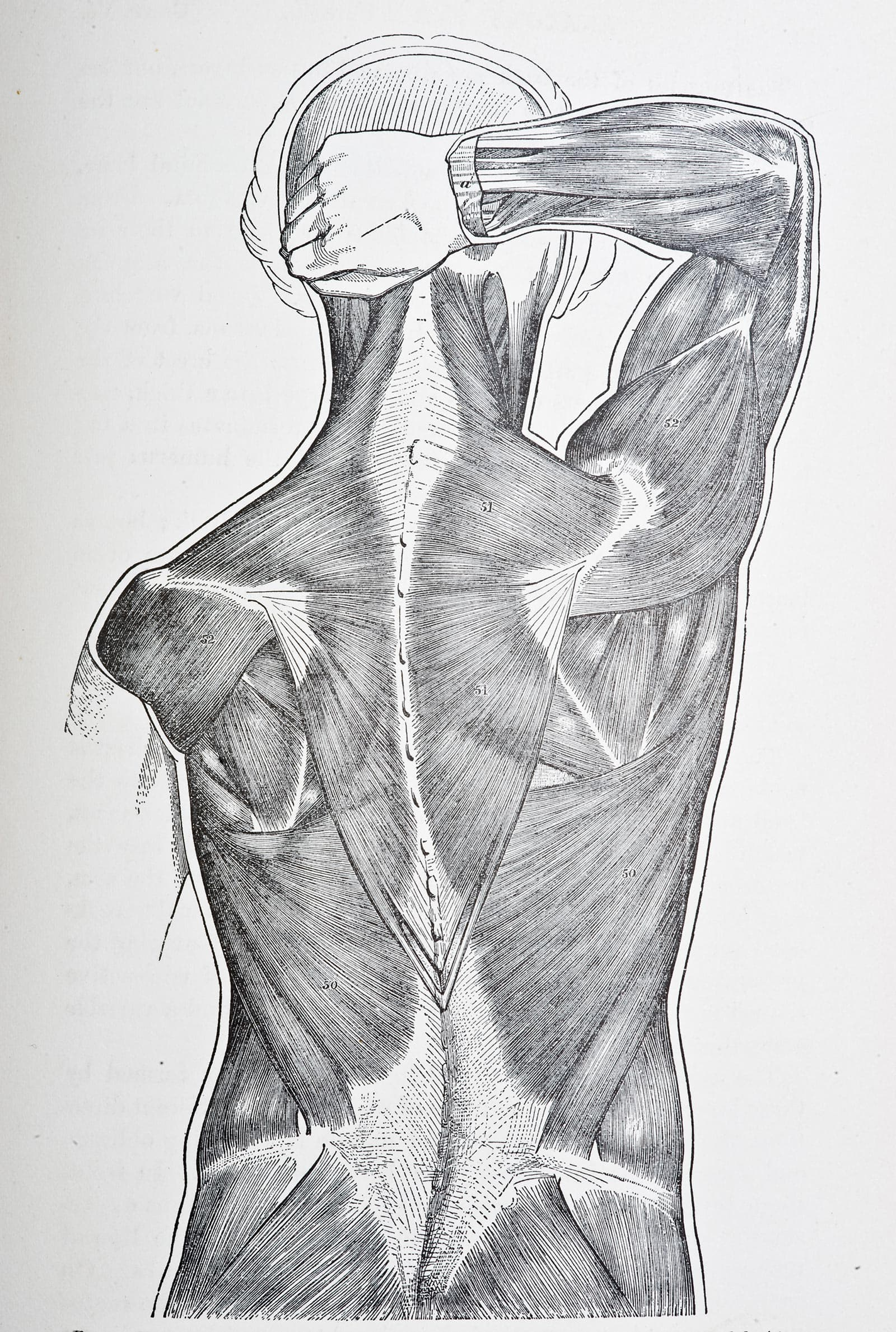 Greendragon sports cream Back Muscles